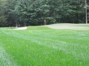 artificial golf turf putting green installation with sand bunker