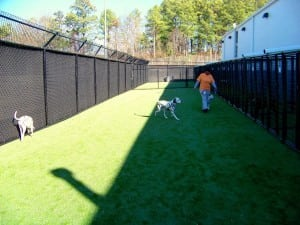 dogs playing in outdoor pet area near kennels